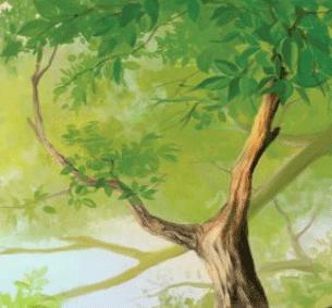 Tree पेड वृक्ष
